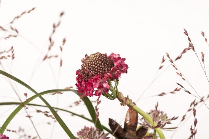 Mickaël Rault, l'art d'un fleuriste qui met son talent en pot